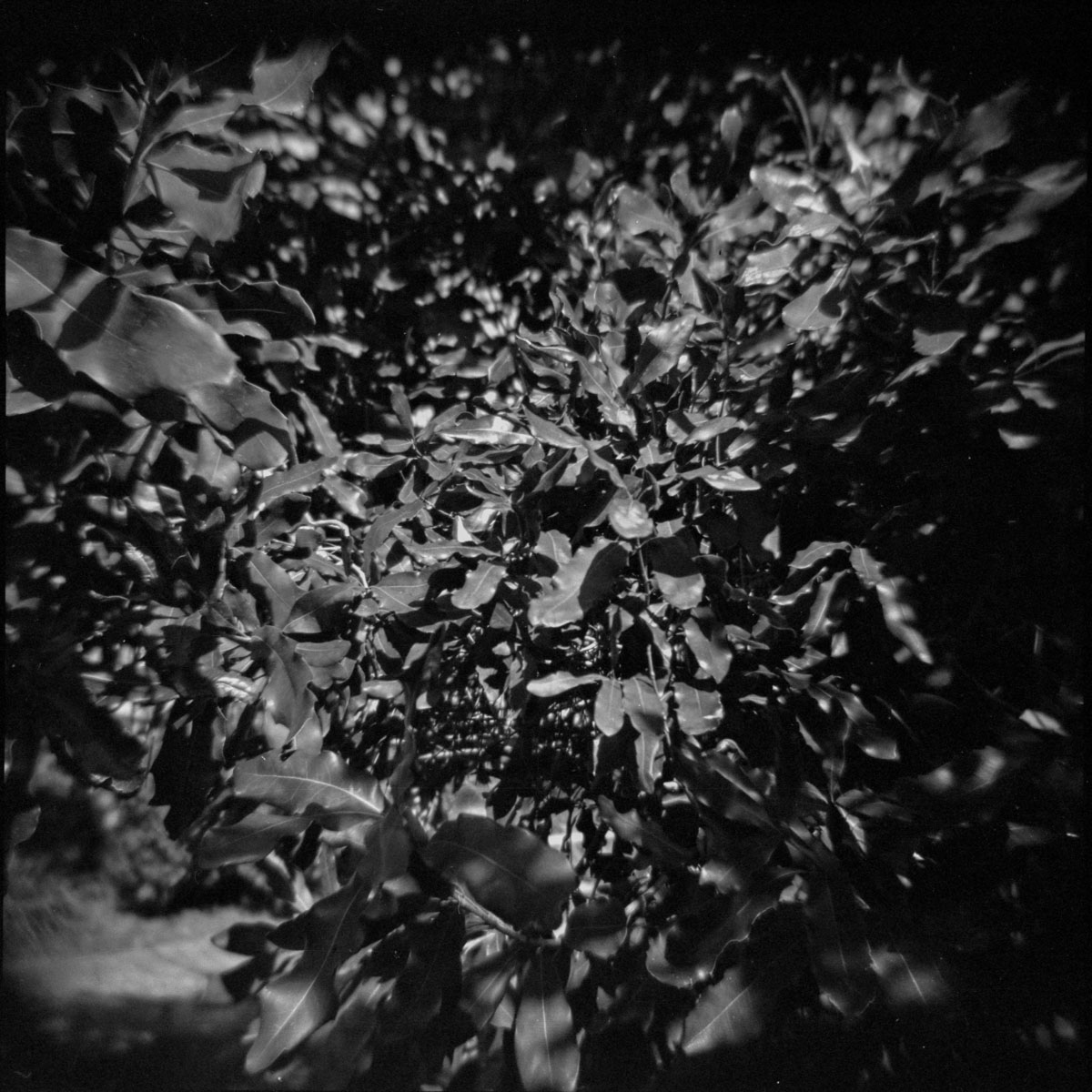 Fomapan 400 with Holga - plastic medium format camera - part ii