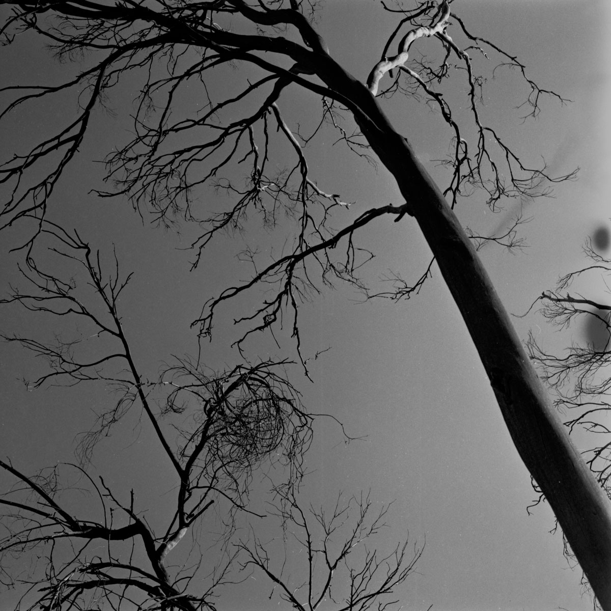 Medium Format photography - tired of people - go to trees