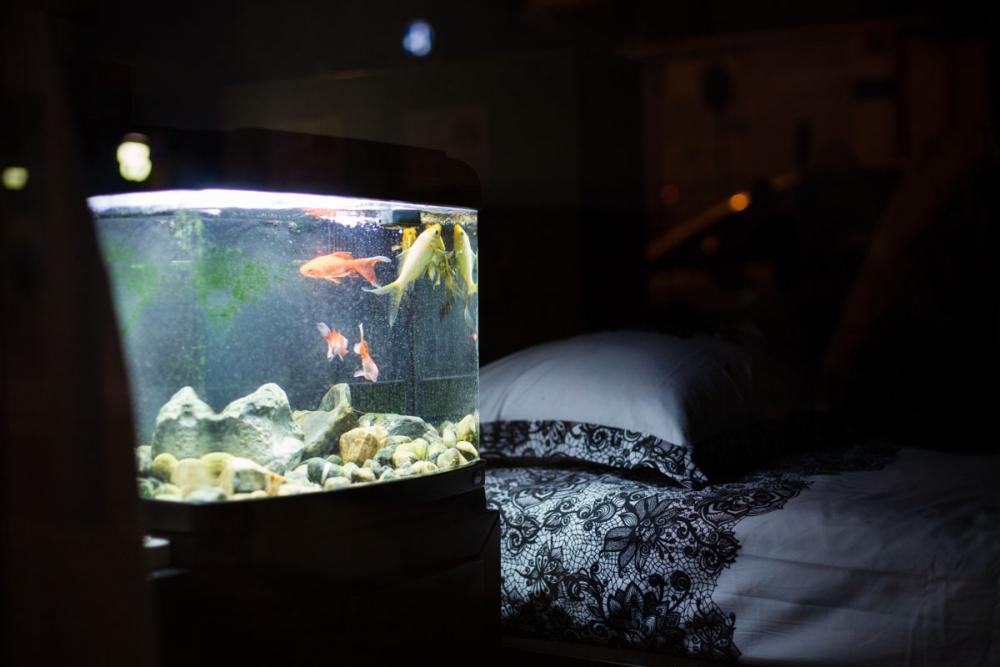 Aquarium_store_daily