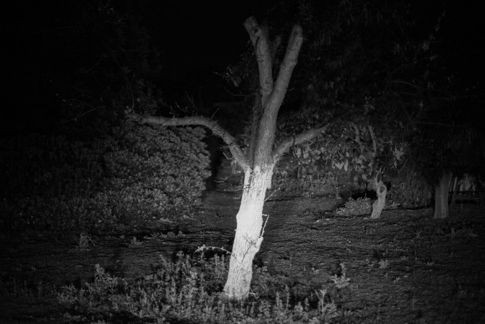 cutted_tree_Victor_Bezrukov