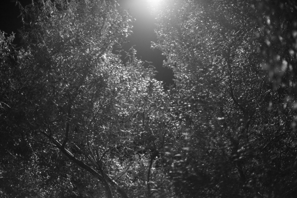 trees_and_light