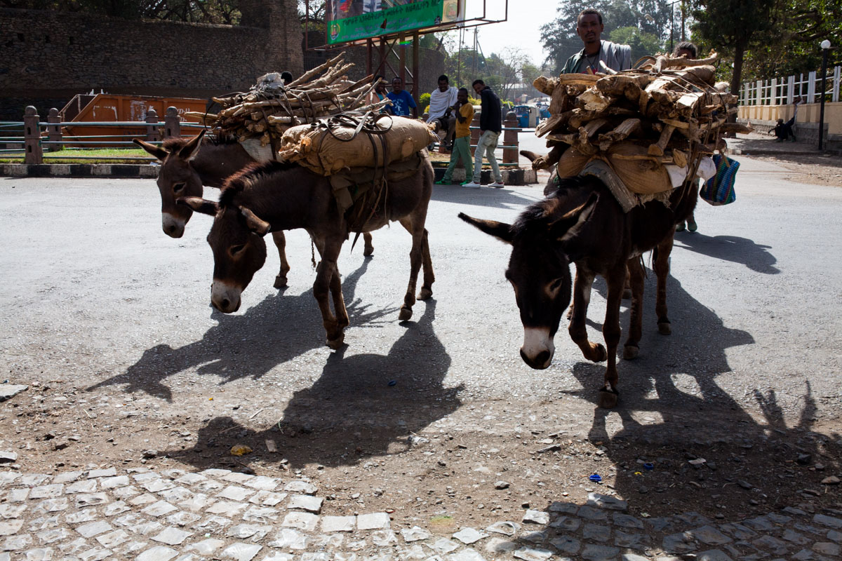 from my Ethiopia trip - two days in Gonder (Gondar) - ii