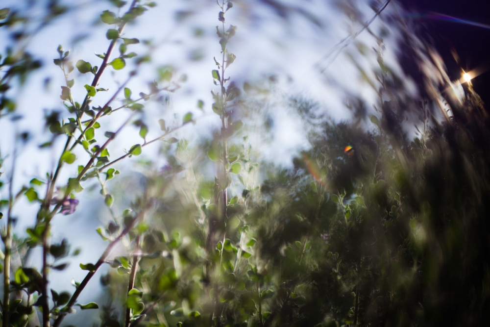 freelensing_Color
