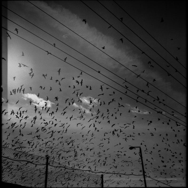 birds_bazaar