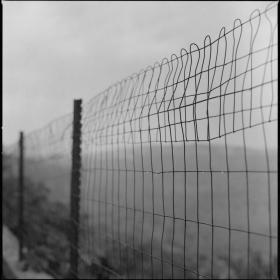 rainy fence