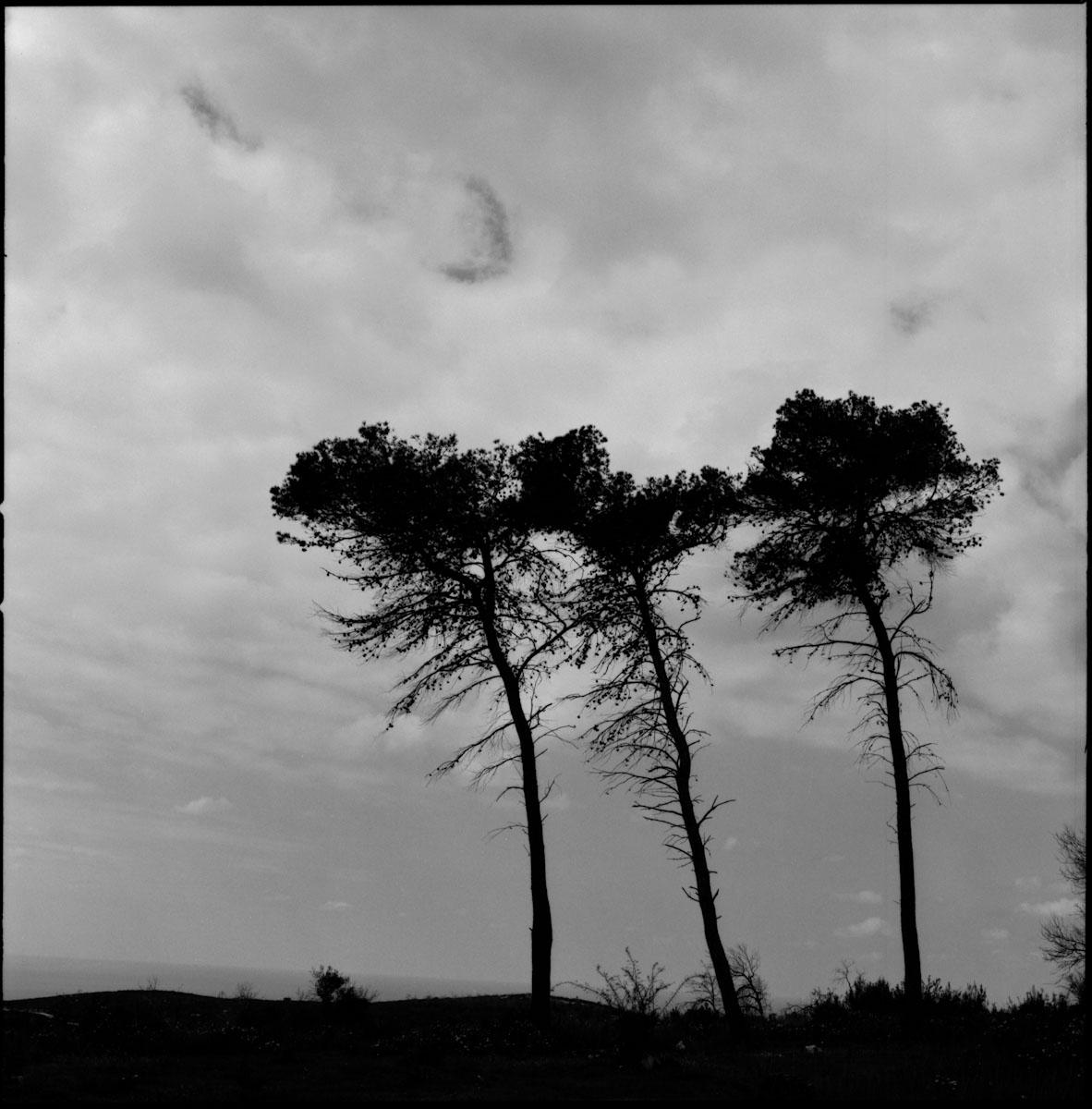 kodak-100tmx-dark_life_of_three_trees_victor_bezrukov.jpg