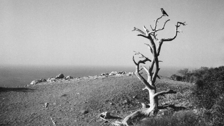 Kodak Portra 400 c-41 film in black and white chemicals